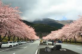 富士霊園1.jpg
