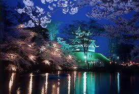 高田公園夜桜.jpg